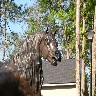 Horse at appartment entrance.JPG (1165454 bytes)
